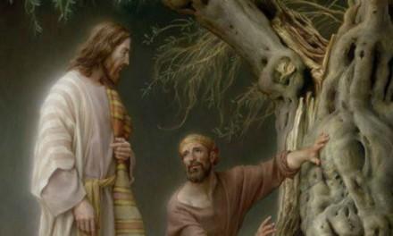 La alegoría de los olivos – Lección 13 del Libro de Mormón