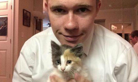 VÍDEO: misioneros mormones rescatan a gatito de aguas pluviales