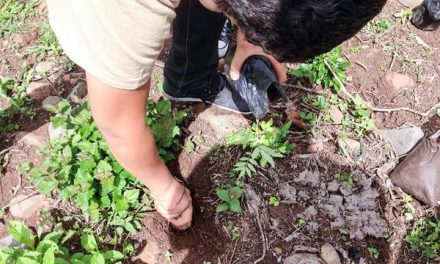 Jóvenes mormones contribuyen por el medio ambiente en Honduras
