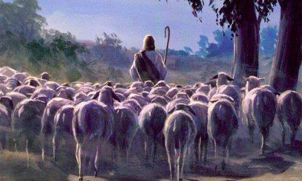 """""""Entonces los reuniré"""" Lección 40 del Libro de Mormón"""