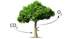 Jóvenes mormones plantan árboles