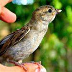 por primera vez vi un ave