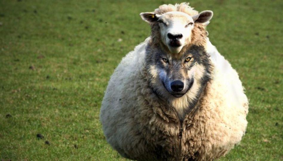 ¿Dios llama a los que son lobos vestidos de oveja?