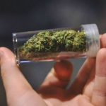 marihuana y conflictos