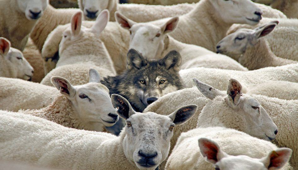 oveja y buen pastor