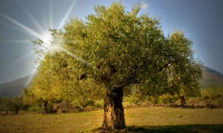 """Qué simboliza el Árbol de la Vida en el Jardín del Edén + el significado sagrado de """"las espadas encendidas"""" de los ángeles"""
