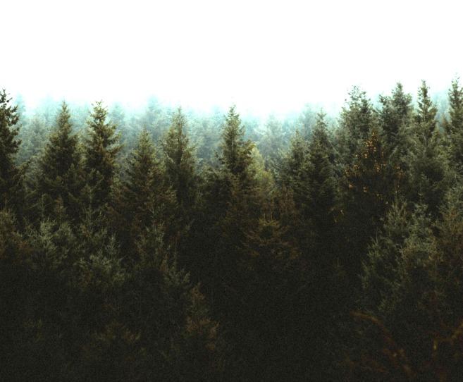 árbol bosque