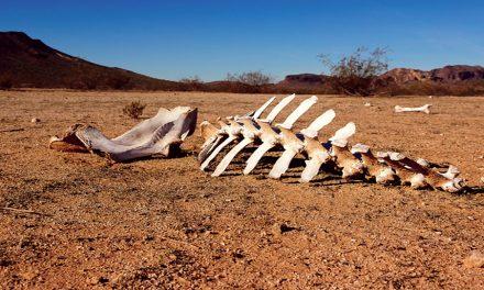 Lo que la visión del valle de los huesos secos de un profeta puede enseñarnos acerca de la esperanza