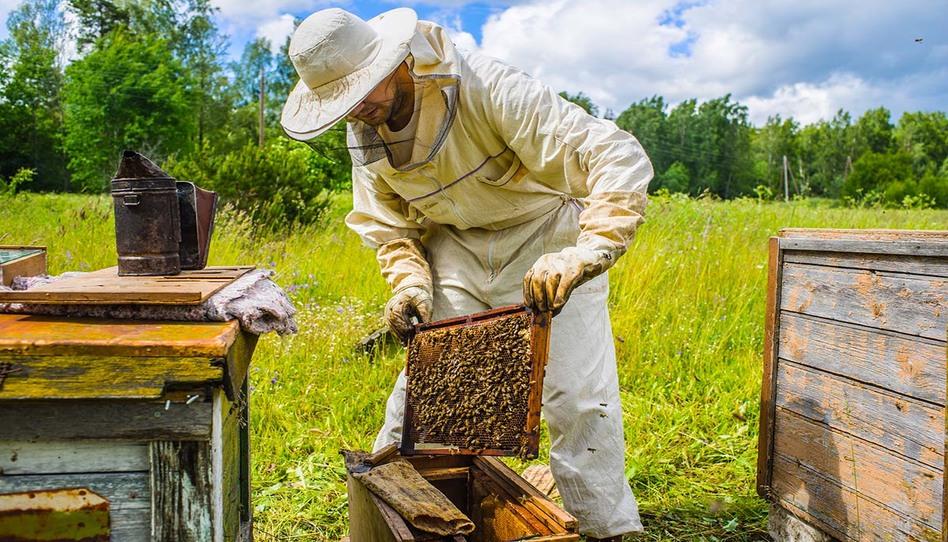 Daniel Peterson: Cómo los hallazgos recientes sobre la apicultura en la antigua América se relacionan con el Libro de Mormón