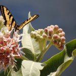 Medio Ambiente - Dia de la tierra