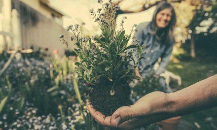 Las semillas están seguras en tu alacena, pero para eso no son las semillas