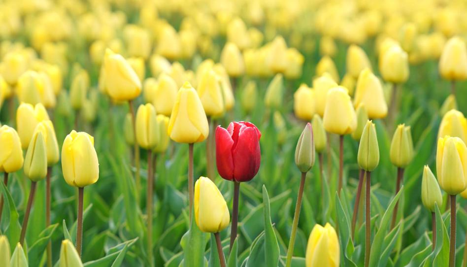 Somos únicos e irrepetibles: Cómo apreciar nuestro valor individual