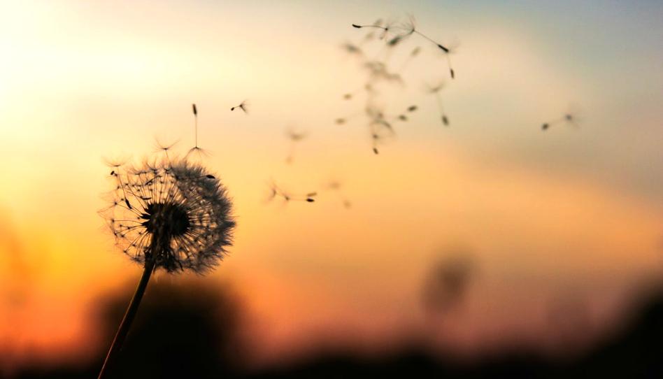 Cómo encontré paz después de que mi hijo falleciera a pesar de la promesa recibida de una bendición del sacerdocio