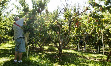 Las granjas y huertos de bienestar de la Iglesia de Jesucristo esperan una rica cosecha para ayudar con la pandemia del coronavirus