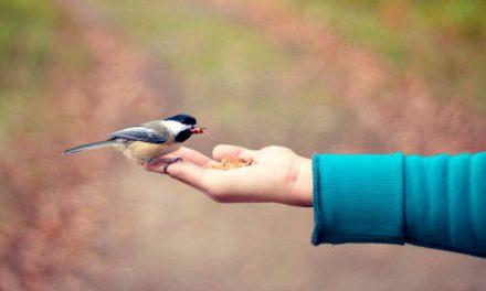 Las entrañables misericordias de Dios, los pequeños milagros en nuestra vida