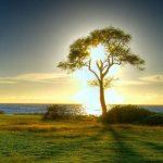 árbol jardín de eden